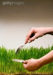 cutting_grass