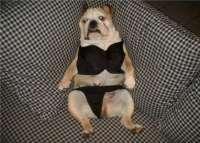dog_wearing_underwear-11945-200