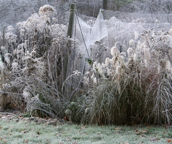 grasses_and_frost250